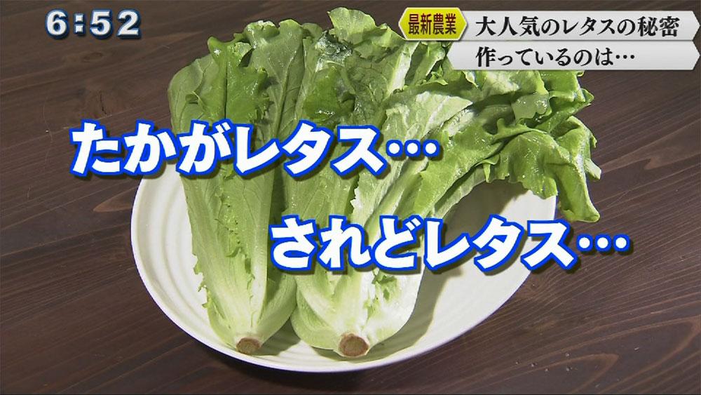 Qプラスリポート「沖縄セルラー植物工場」