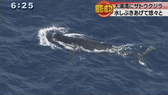 大浦湾でクジラの撮影に成功
