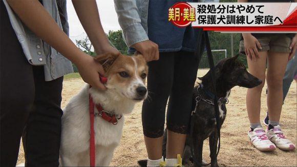 保護犬を家庭犬へ 子どもたちが訓練