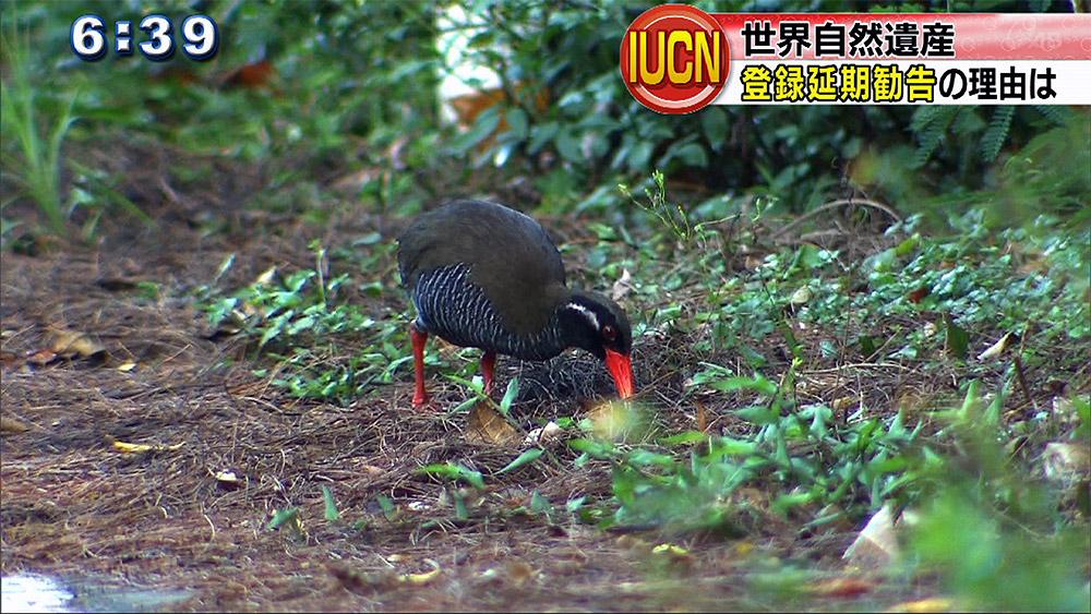 IUCN 世界自然遺産 登録延期勧告 その理由は