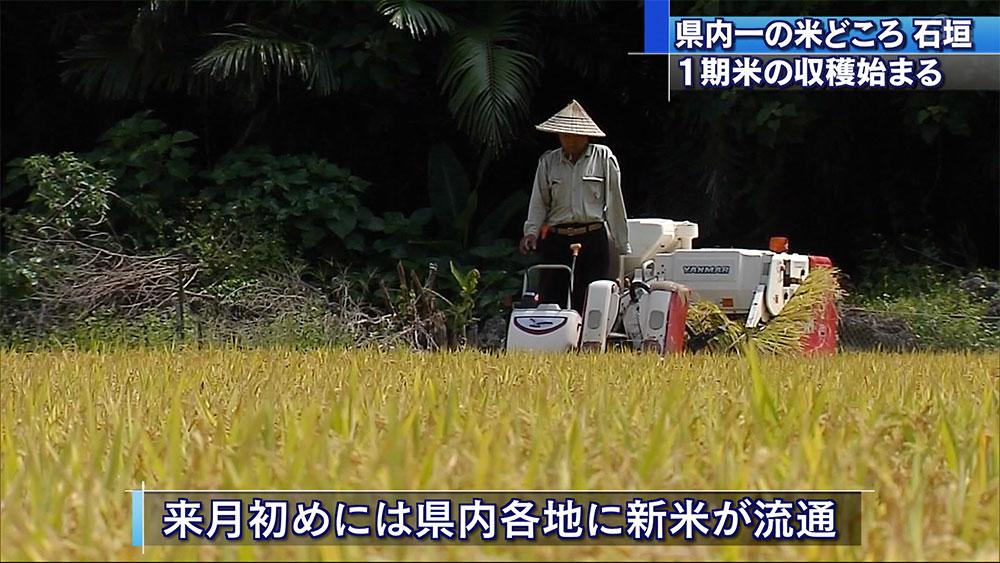 石垣島で1期米の収穫始まる