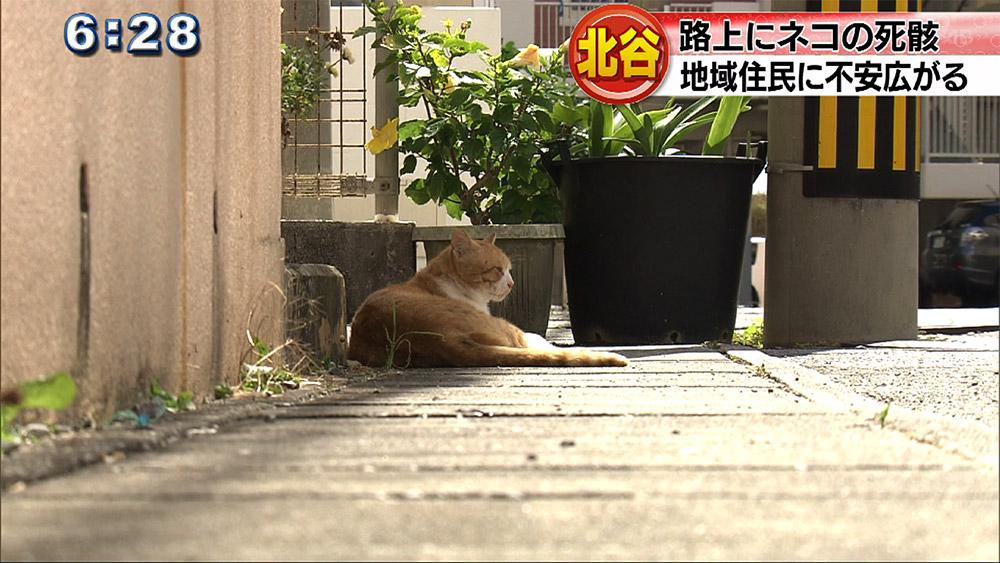 北谷町 路上にネコの死骸で市民に不安