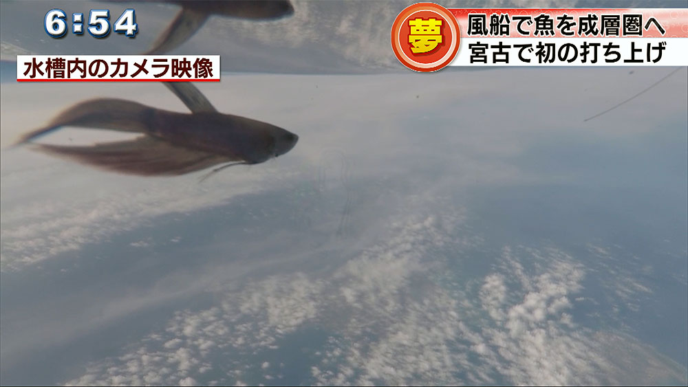 Qプラスリポート 風船で魚を成層圏へ打ち上げ