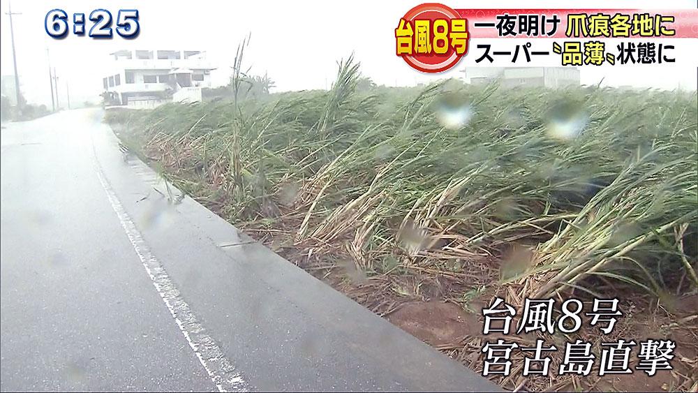 台風から一夜 被害状況は