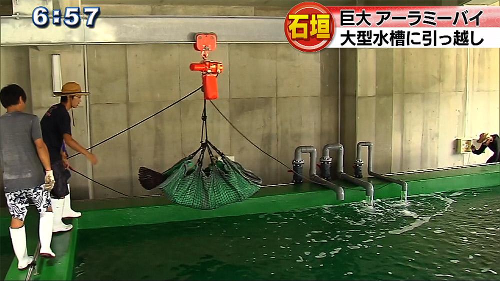 大型ハタ類の大型水槽を運用開始