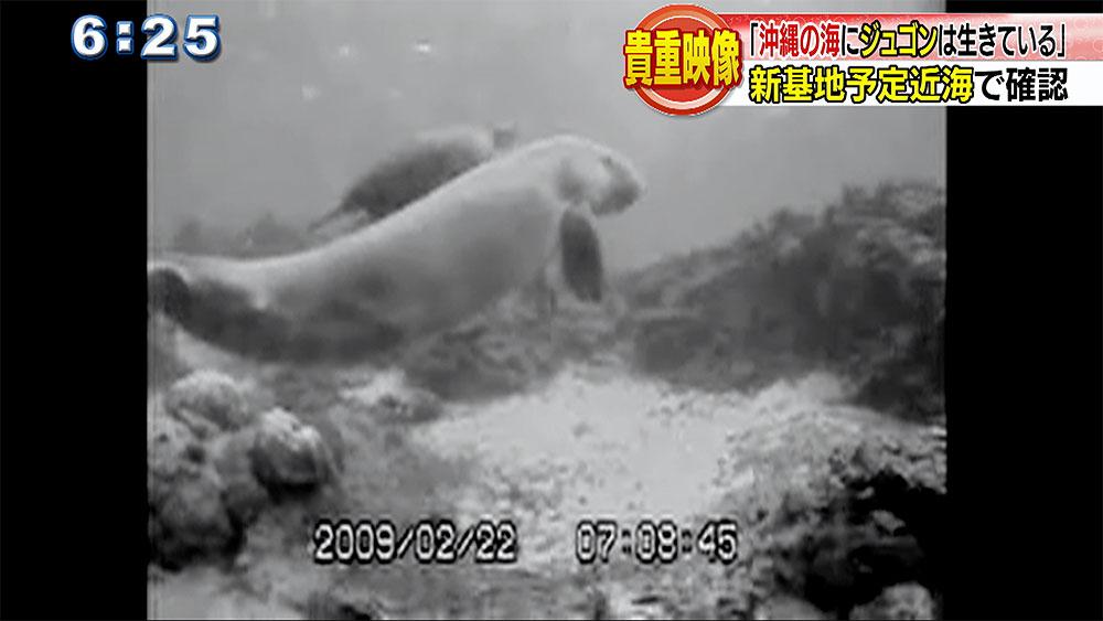 貴重映像!ウミガメと泳ぐジュゴンは何を訴える