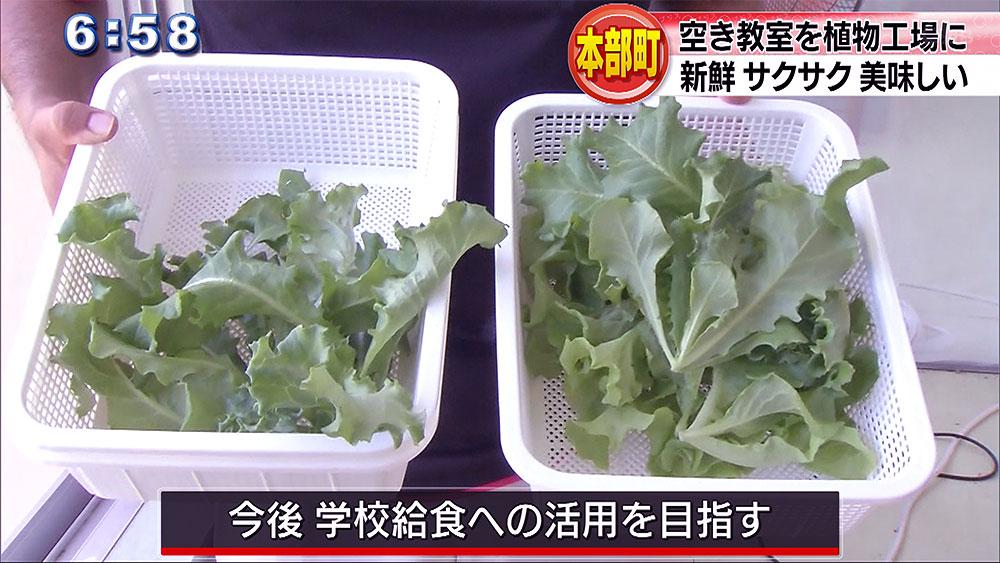 空き教室で野菜を栽培