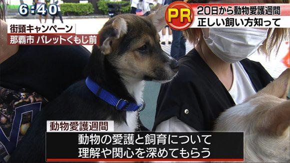 動物愛護週間 街頭キャンペーン