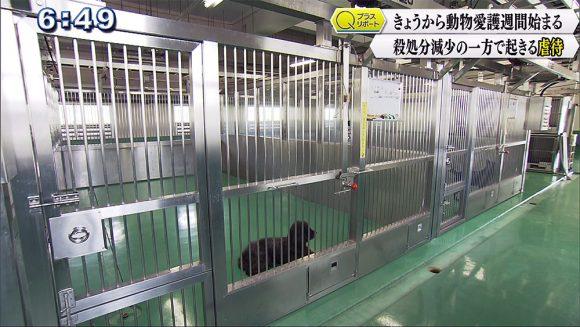 Qプラスリポート きょうから動物愛護週間 殺処分減少の一方で起きる虐待