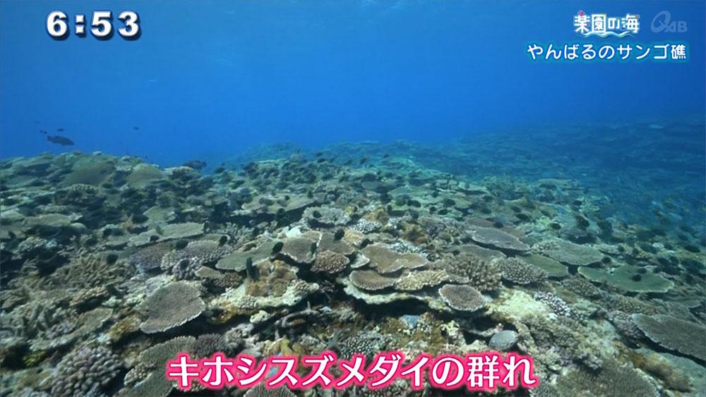 楽園の海 やんばるのサンゴ礁