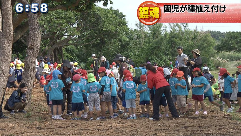 ヒマワリ畑の迷路づくりで園児らが種を受け付け