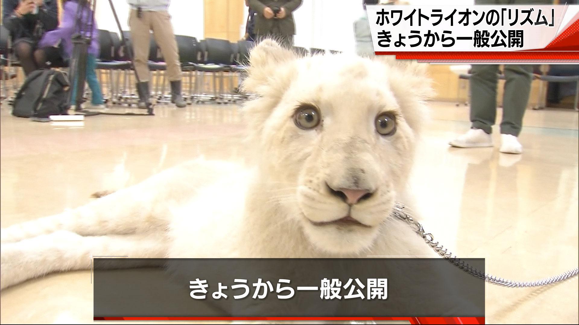 ホワイトライオン「リズム」報道公開