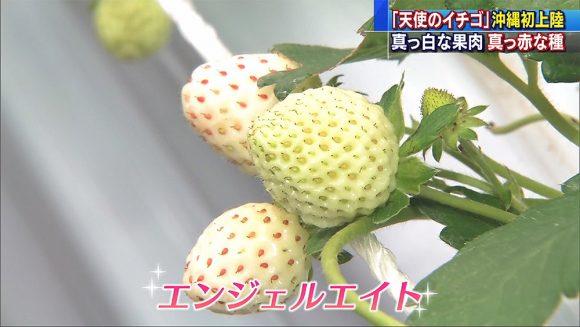 白イチゴ「エンジェルエイト」 沖縄初上陸