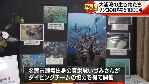 大浦湾の生き物たちの写真展
