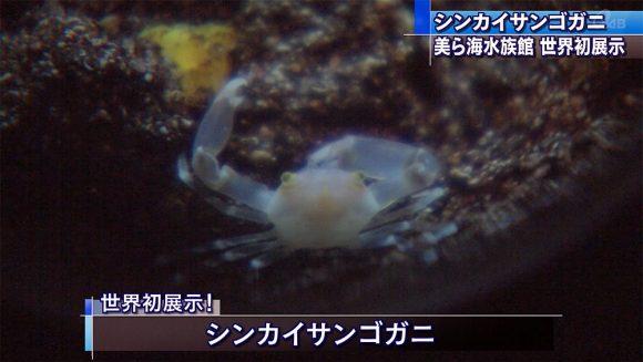 「シンカイサンゴガニ」を世界初展示!
