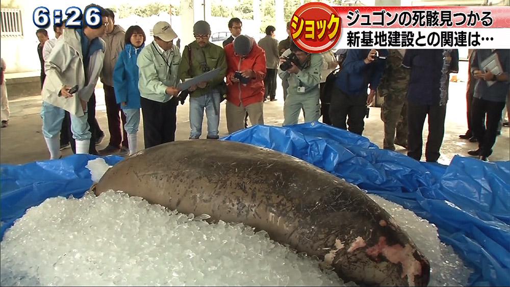 ジュゴンの死骸発見 広がる波紋