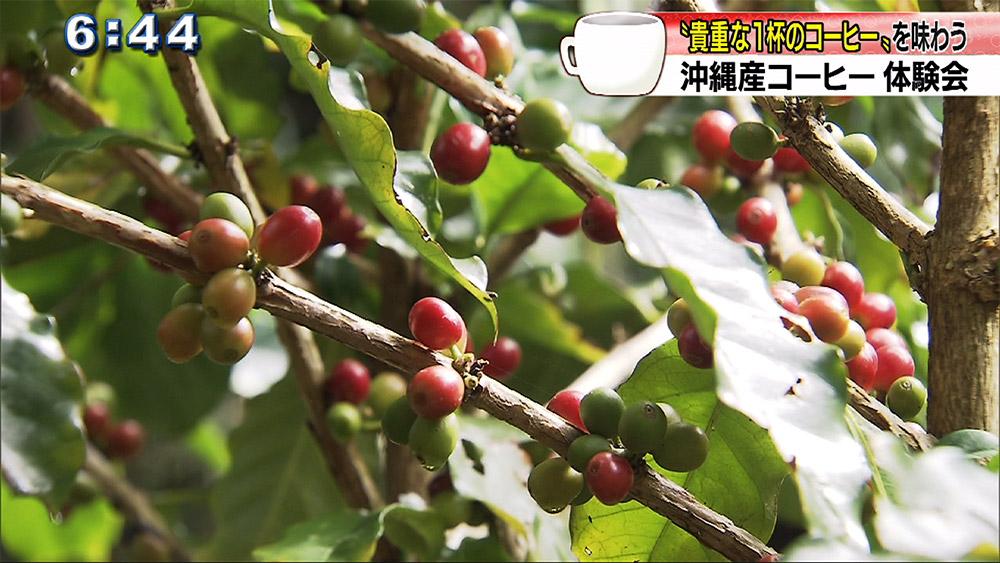 沖縄産コーヒー体験会 貴重な「1杯のコーヒー」を味わう