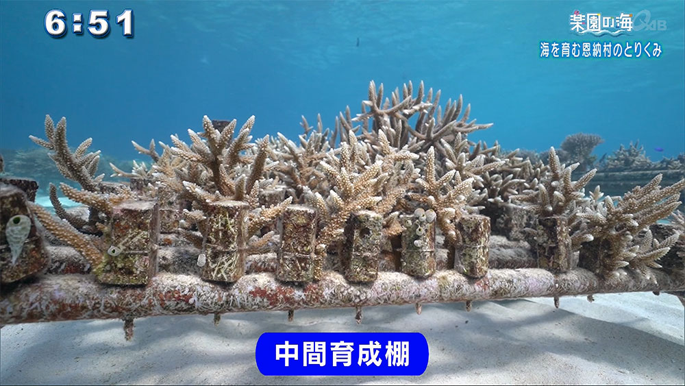 楽園の海 海を育む恩納村