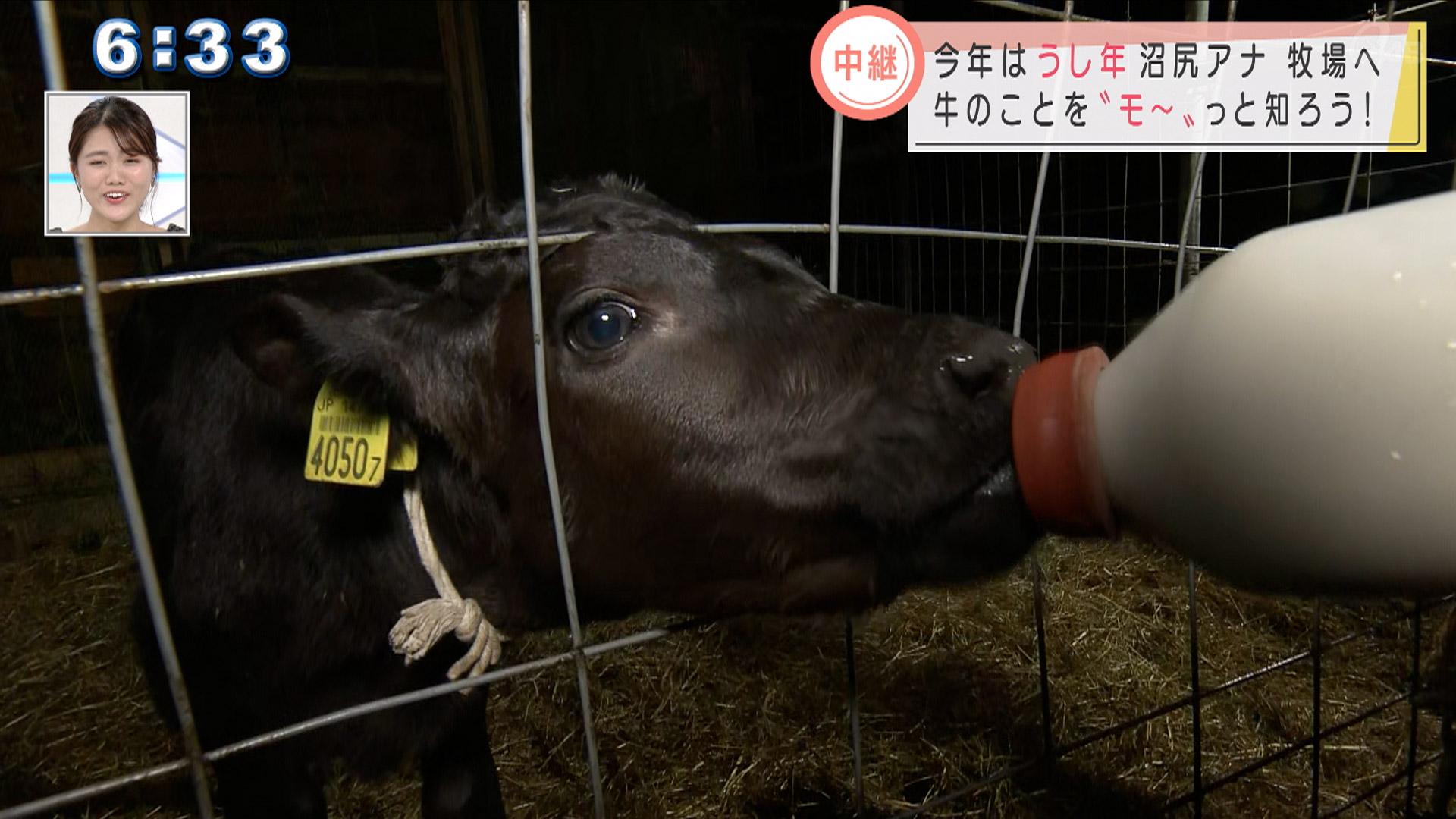 中継 沼尻アナ 牧場へ向COW!
