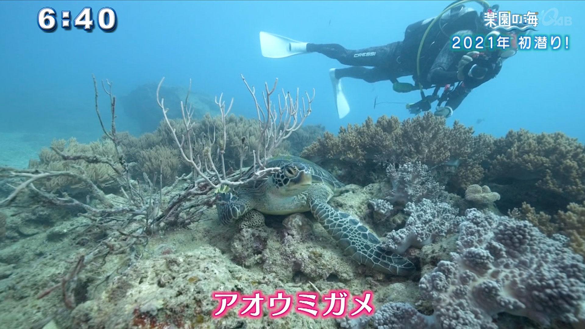 楽園の海 2021年初潜り!
