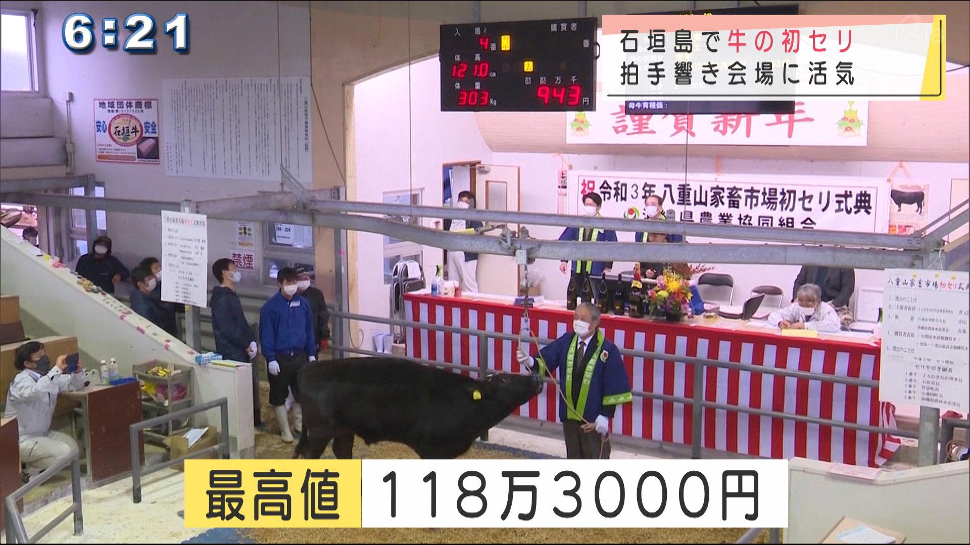 最高値は118万円 石垣島で牛の初セリ