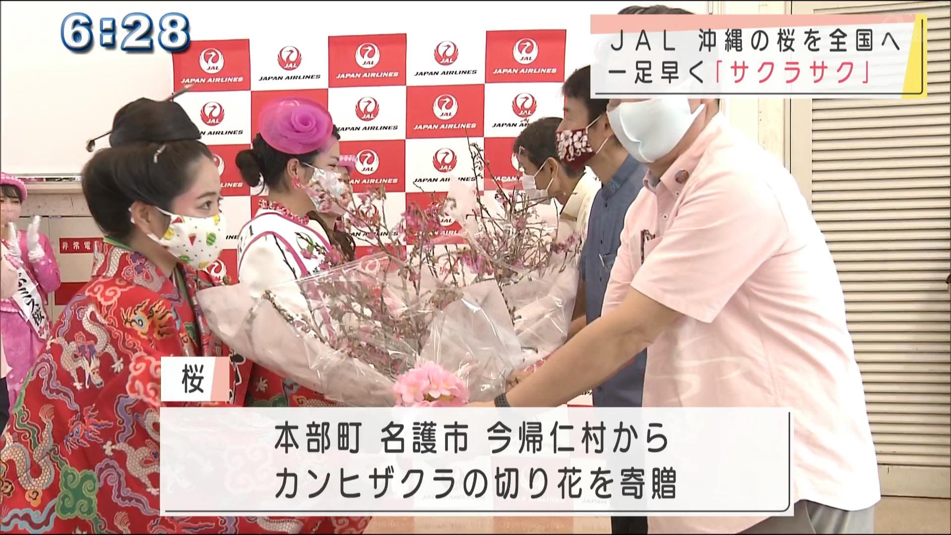 日本一早い沖縄の桜を全国へ JALグループ発送式