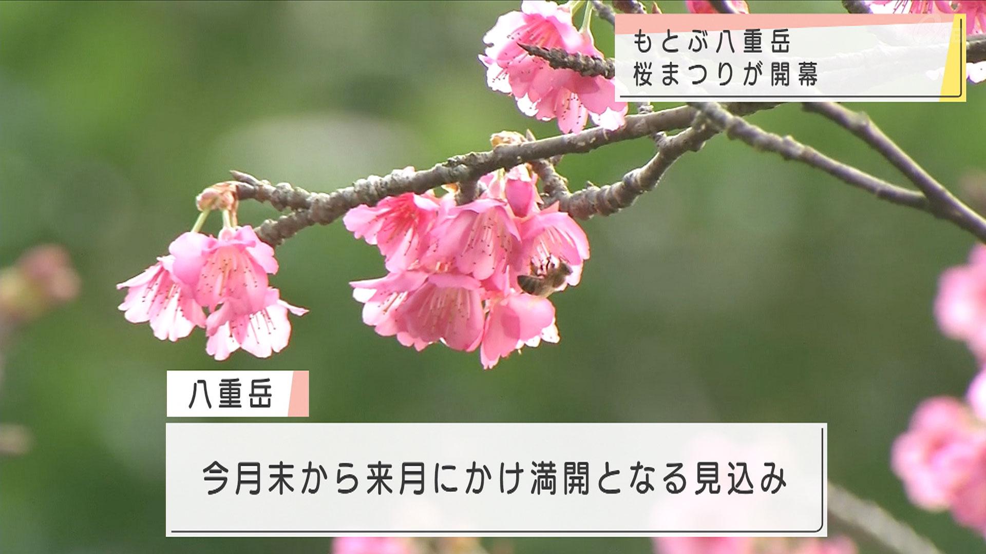 「車窓から心を癒す」 もとぶ八重岳桜まつり