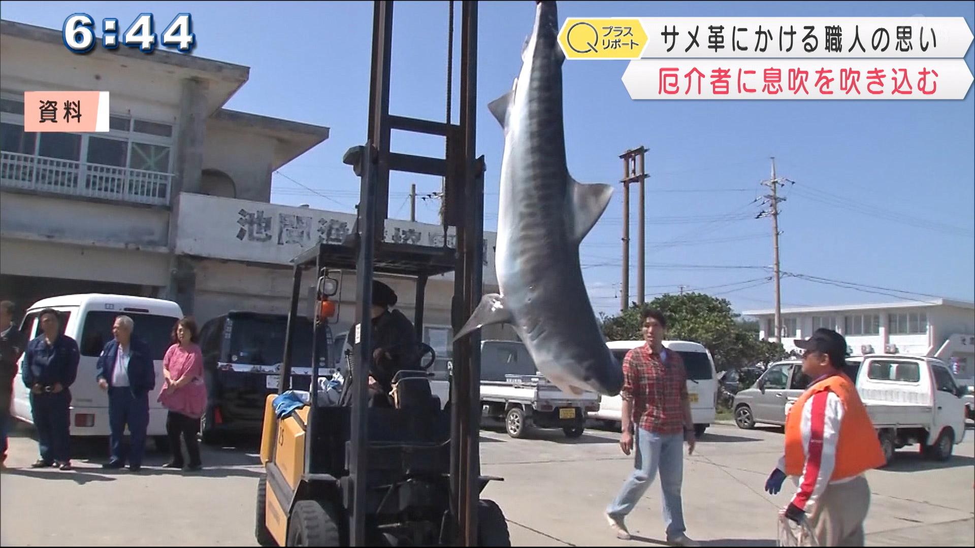 サメ革にかける職人の思い 厄介「者」を役立つ「者」に