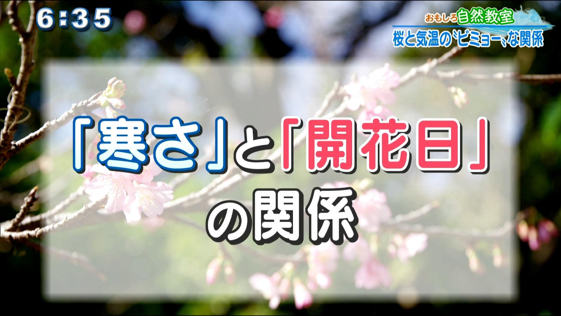 おもしろ自然教室 桜と気温の「ビミョー」な関係