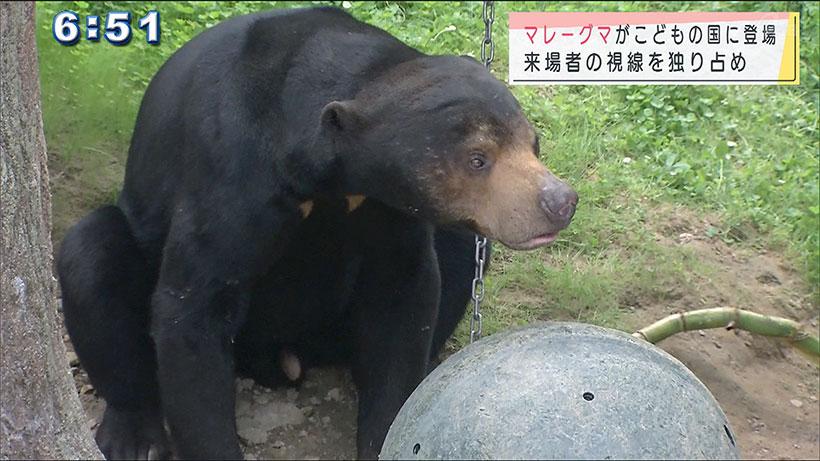 沖縄こどもの国 マレーグマが仲間入り