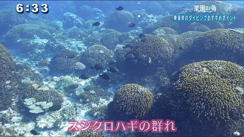 楽園の海 東海岸ダイビングおすすめポイント