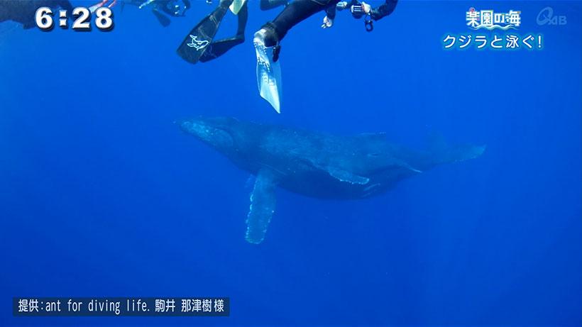 楽園の海 クジラと泳ぐ!
