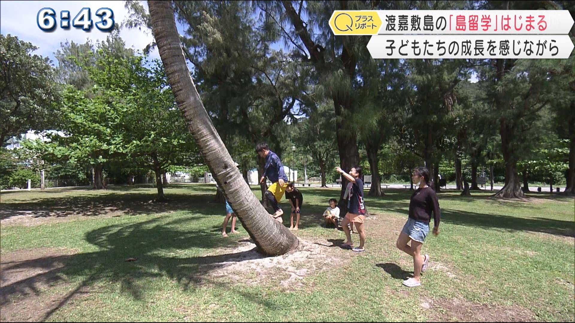 渡嘉敷島留学「わらびや」の春