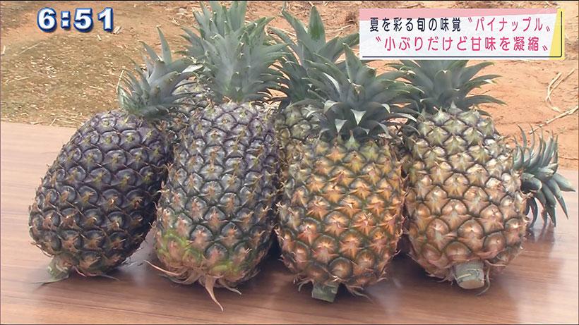 旬を迎えたパイナップルの収穫祭