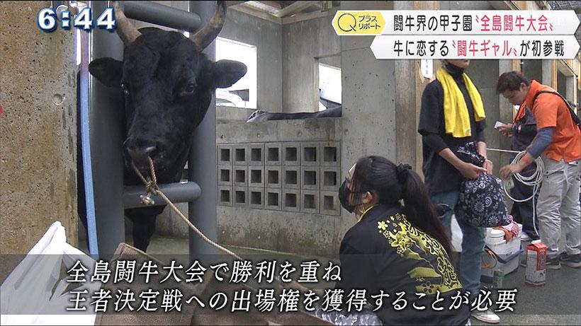 全島闘牛大会 闘牛ギャル初出場