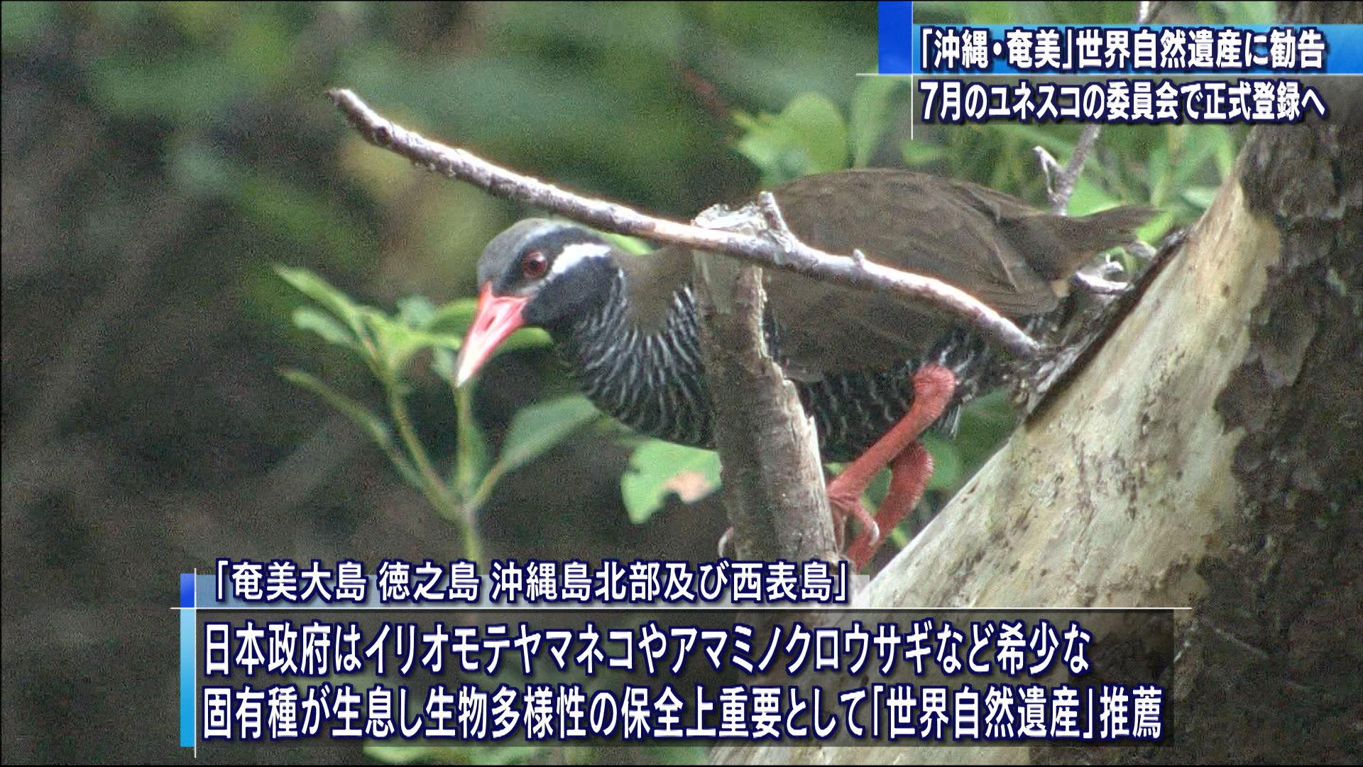 「沖縄・奄美」世界自然遺産に登録へ