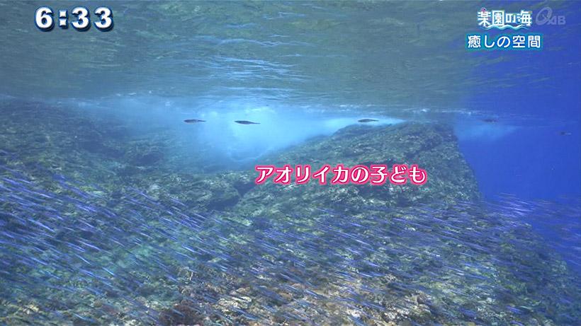 楽園の海 癒しの空間