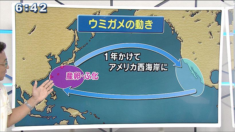 気象予報士/テルさんの おもしろ自然教室#9「世界 ウミガメの日」
