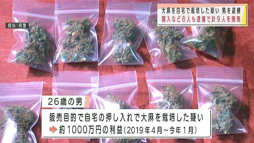 沖縄県警 大麻を栽培した疑いで男を逮捕 購入した8人も摘発