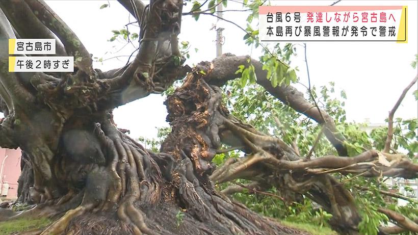台風6号 発達しながら先島地方に接近
