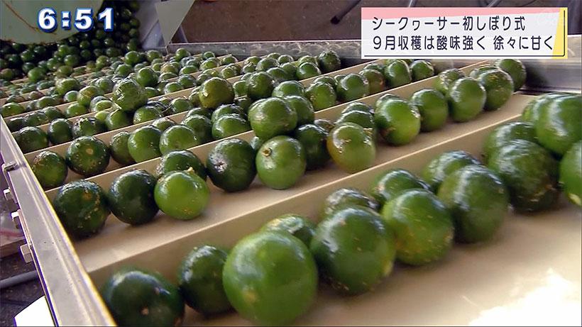 本部町シークヮーサー果汁初しぼり式