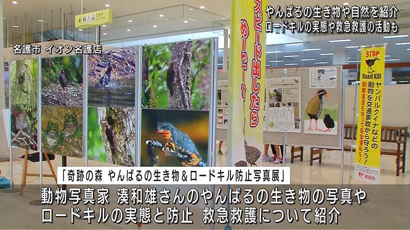 奇跡の森 やんばるの生き物&ロードキル防止写真展