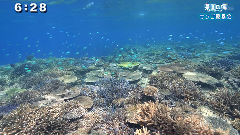 楽園の海 サンゴ観察会