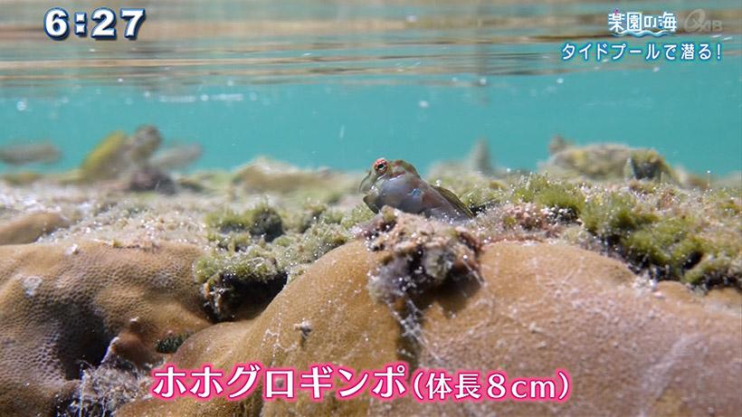 楽園の海 タイドプールで潜る!