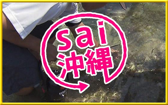 sai 沖縄