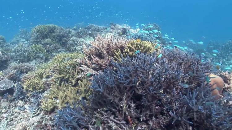 海の森が消える日〜サンゴ再生への挑戦〜